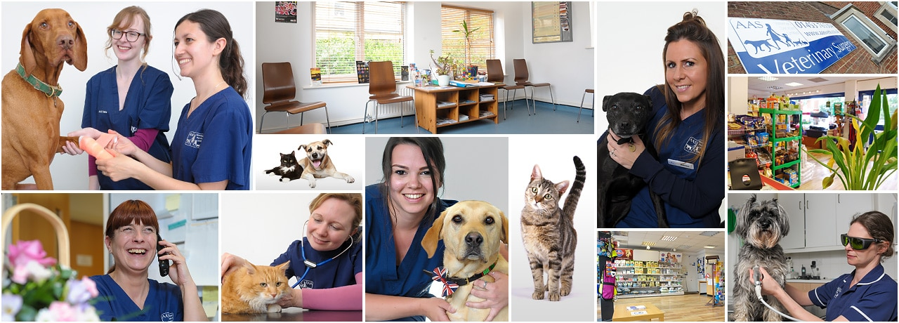 Some of the AAS Vets team, our patients and our facilities
