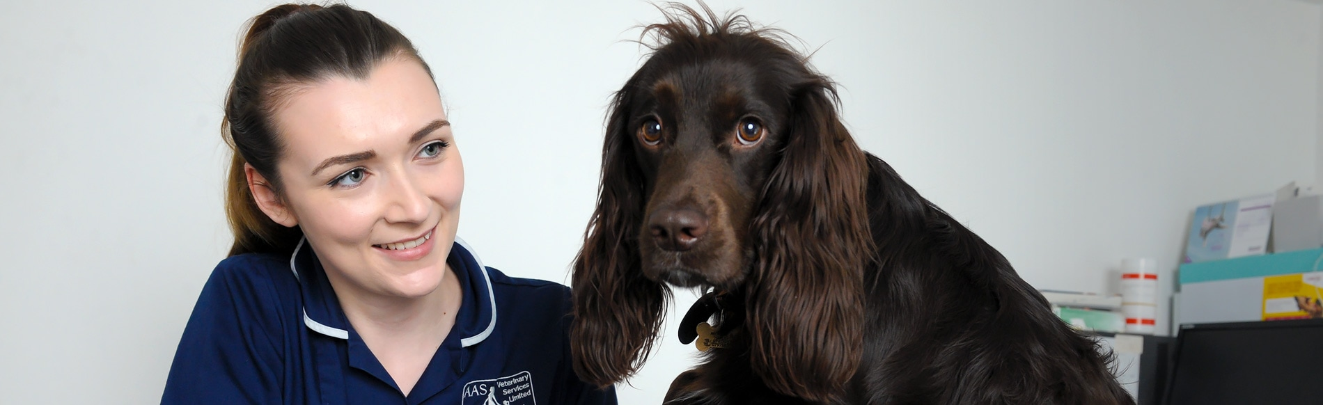 Vets in Gloucester | Vets in Abbeydale, Stroud, Quedgeley, Hucclecote